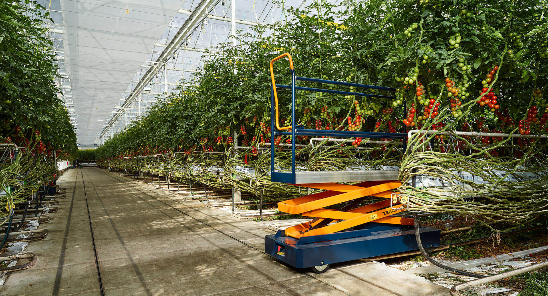 <span>Horticulture driven by Dutch experience!</span>
